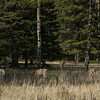 Whitetail deer were found in the former Banff National Army Cadet Summer Training Center area