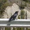 Raven wants a profile shot