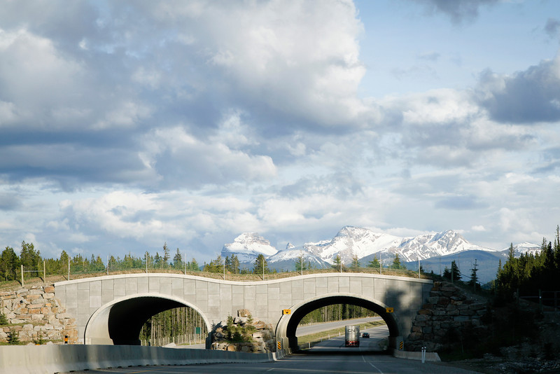 Another Wildlife Overpass in Banff National Park