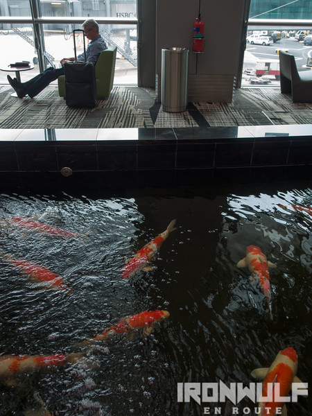 Relax beside the calming sound of a water stream and sight of the Koi Pond