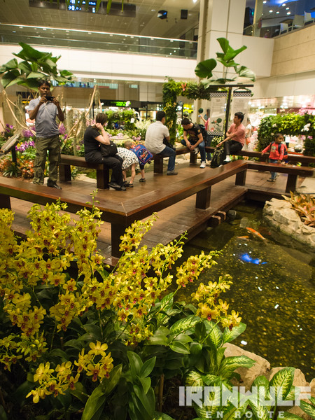 The relaxing ambiance at Terminal 2's Orchid Garden and the Dendobrium Changi on the foreground