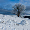 A stark frosted tree stands along the village sledding hill, accompanied by human amusements.