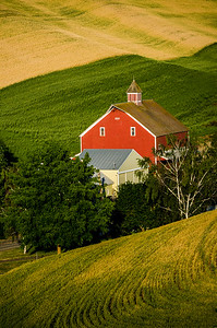 Red Barn and Wheat