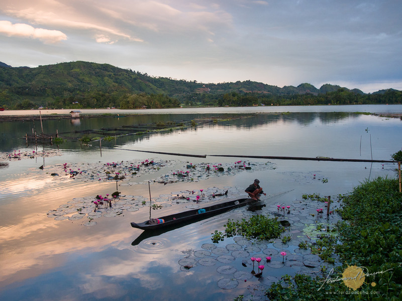 Water lilies in full bloom in the morning while a fisherman tend the nets