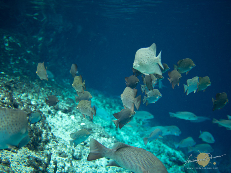 The fishes in the enchanted river