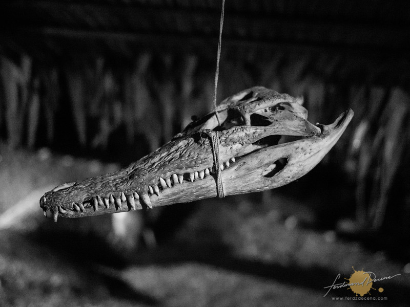 A crocodile skull hanging at a Lundayeh House