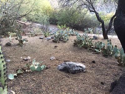 Tucson13