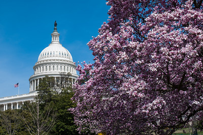 Spring flowers near the nation's capital.