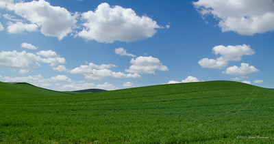 The Palouse Region of SE Washington