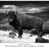 201306 Yellowstone and Grand Teton :