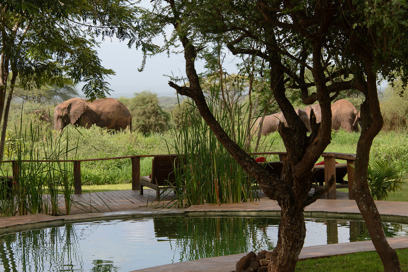 Yes, Elephants came right up to the pool.   While they would like to, they couldn't drink out of it