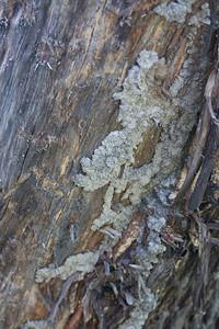 Termites...