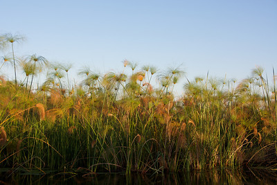 Pampas grass lines the waterways.