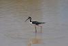 wading bird of somesort in the tidal marsh near the hotel.