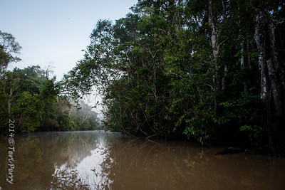 SCENERY - Kinabatangan river-0612