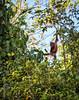 APES - orangutan baby-0540