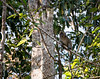 MONKEYS _ long tail macaque-9721
