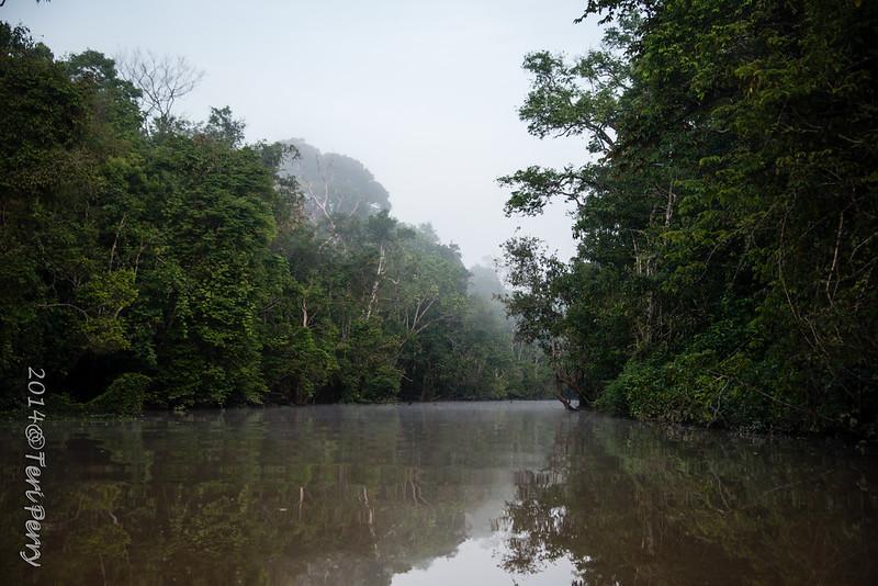 SCENERY - Kinabatangan river-0610