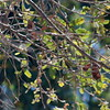 SLO Botanical Garden 20