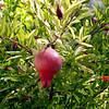SLO Botanical Garden 17
