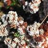 SLO Botanical Garden 08
