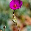 SLO Botanical Garden 11