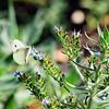 SLO Botanical Garden 07