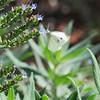 SLO Botanical Garden 06