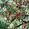 SLO Botanical Garden 16