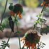 SLO Botanical Garden 21