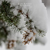 Just some snow, a tree branch and pine cone.