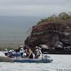 Tourists chasing penguins near Isabela Island