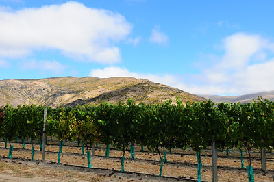 2014_Wanaka_Goldfields      0013