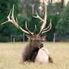 Stag in deer farm along Weir Road
