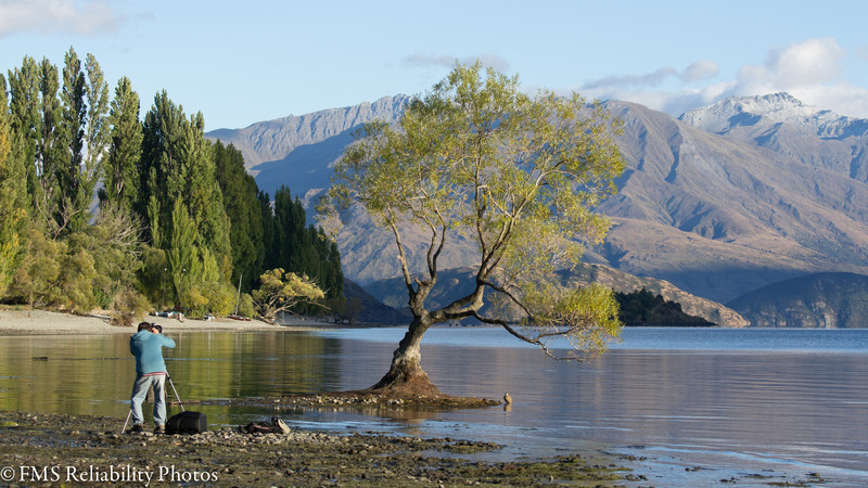 The Lone Willow of Wanaka