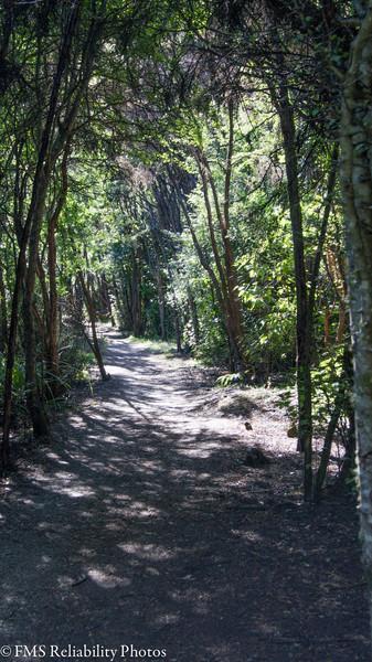 Views along Bobs Cove Track