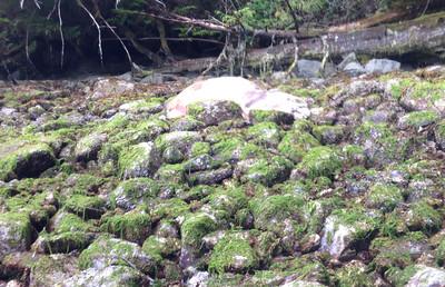 A dead seal