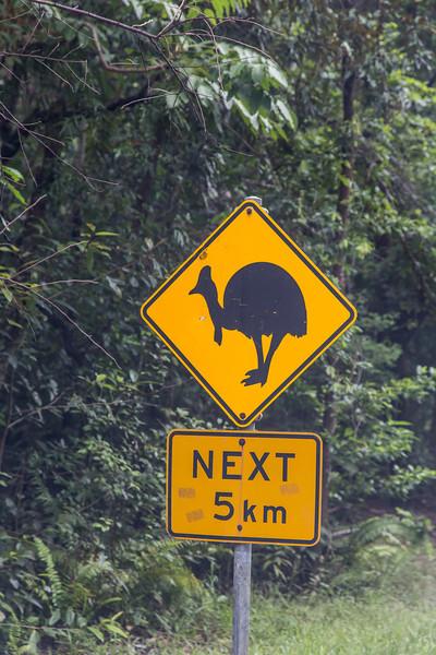 Daintree National Park, Australia.