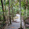 Daintree National Park, Australia.