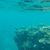 Snorkeling at Great Barrier Reef