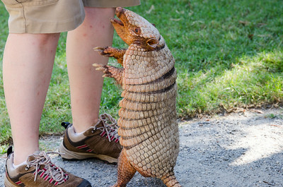 Busch Gardens - Colonial Williamsburg - August 2014