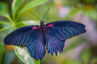 Seattle Butterfly House