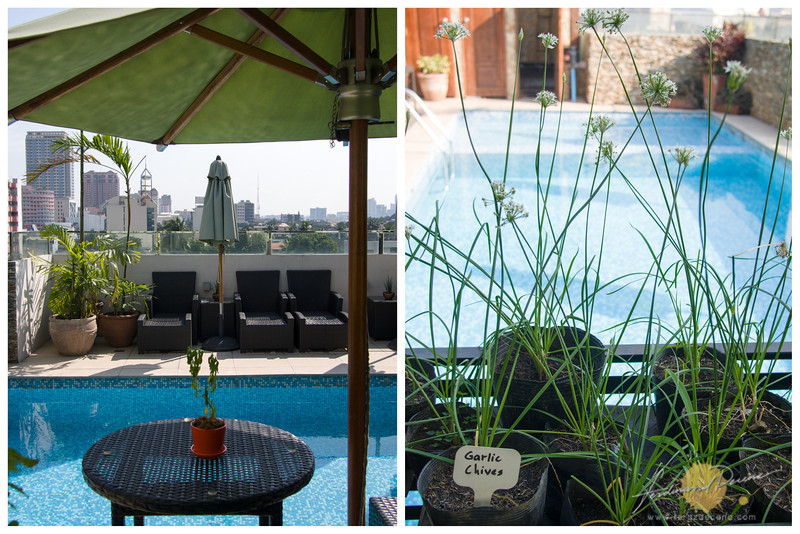 The pool-side and the organic garden