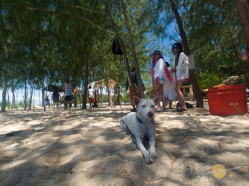 A friendly dog on the island