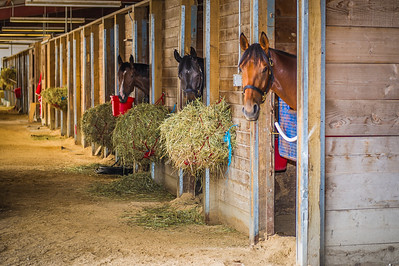 Races Horses in the Barn