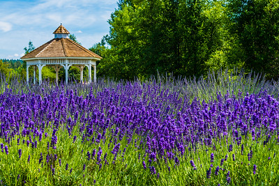 Evergreen Valley Lavender Farm