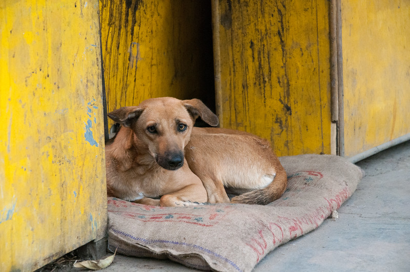 A dog rests alongside a sidewalk vendor stall in New Delhi.