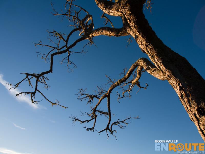 Beautiful tree at the summit of Mt Kofafey
