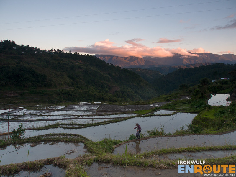 Afternoon at the rice terraces