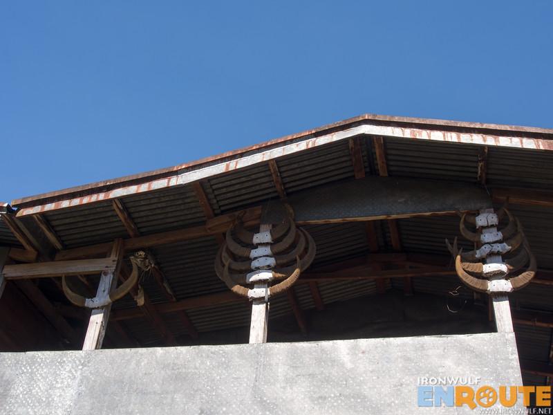 Water buffalo trophies hanging